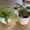 我が家の観葉植物 2021・3・28