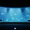 ついにGWスタート!【シーン別】この連休にオススメの都内の水族館をご紹介!