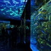 夏の北陸 石川 のとじま水族館へ