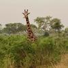 ウガンダスタディーツアー体験記③ウガンダのサファリ マーチソン・フォールズ国立公園