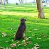 犬などの動物にマイクロチップを装着する理由や登録方法