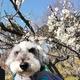 【ペットとお散歩】佐布里池梅まつりで春の訪れを感じてきました