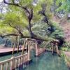 御手洗池(茨城県鹿嶋)