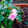 花にヤツが登場!大至急対策を!/YouTube更新しました。(ハムスター編)