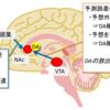 脳報酬系と動機づけのメカニズム