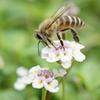 【3月8日はミツバチの日】ミツバチの日の楽しみ方の色々