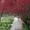 心を洗う春の花たち
