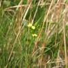 季節が流れると、同じ場所に、ちがうお花が咲く