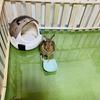 ウサギのちまき今日の1枚『得意技』