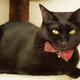 猫の毛並みがボサボサになるのは病気なの?