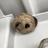 浜松市でガレージにできたスズメバチの巣を駆除してきました!