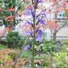 秋草の園・その3