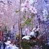 京都は宿泊激戦区 桜シーズンの人気宿は早くも売り切れ続出