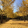 秋、深まる