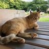 【地域猫】またまた新入り☆茶トラちゃん!