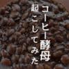 コーヒー豆で酵母を起こしてパンを焼けるかワクワク実験記録。