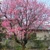 今日見頃の花