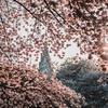 新宿駅近くの花見スポット特集! こんなところに桜咲いてるんだ!