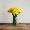 モーツァルト:弦楽四重奏曲第14番《春》【名盤3選と解説|感想】可愛らしい春の歌