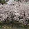 弘前城桜まつり