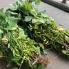 ローラー2時間40分/採れたての枝豆