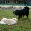 白馬で出会った犬たち