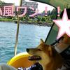 柴犬チャー、河口湖でスワンに乗る!!