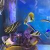 夏は海水魚飼育と少しカブトムシ…
