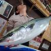 間に合った!本日入荷の漁港直送のお魚さんたち!