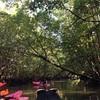 カヤックツアーでマングローブ林の大自然を満喫しつくす