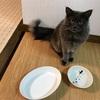 【ニトリ】タモン用に、猫&足あと模様のお皿を購入しました〜