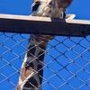 京都 岡崎散歩 キリンに会いに動物園へ
