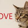 猫好きにおすすめのドラマ「ブランケットキャッツ」再放送日程&感想&あらすじ
