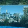 2020/11/16 石神井公園散歩 01 サンシャイン水族館