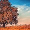 秋は大豆が美味しい! 乾燥大豆の戻し方を紹介!