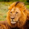 【ヒューマンデザイン】獅子座日食:論理的なリーダーシップ