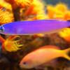 東海大学海洋科学博物館&自然史博物館