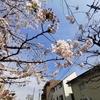 【ライカで旅する】東京の桜とコロナ禍の3月を撮影散歩