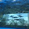 サンシャイン水族館のペンギン「天空のペンギン」