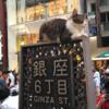 看板猫 & くまモン in GINZA