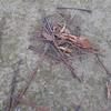 落ちている枝を見かけたら、その断面を覗いてみよう!