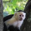 【コスタリカ・プンタレナス】大自然とたくさんの野生動物に出会えるツアーに参加