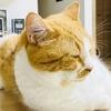 【猫学】猫の21歳=人間の100歳?!猫の年齢についてまとめてみた。