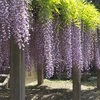 4月下旬~5月上旬:おすすめ写真スポットin徳島