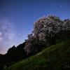 【天体撮影記 第128夜】 佐賀県  静寂に包まれた夜空の下に咲く納戸料の百年桜と夏の天の川