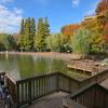 見次公園の池(東京都板橋)