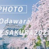 小田原城の桜 2021:Sony α7c + SEL35F14GM