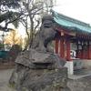 狛犬がかっこいい 浅草神社・被官稲荷神社