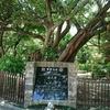 12回目の沖縄は3回目の一人旅①(那覇2泊3日)沖縄ゆいレールとバス編。