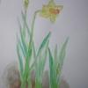 水仙の絵を描き、お墓参り、鷺草の植え替えも